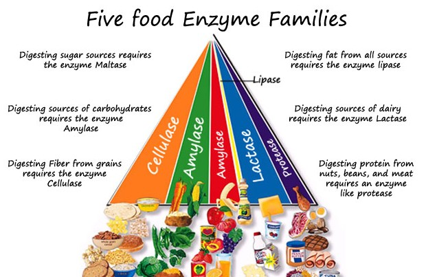 Enzymes (1)