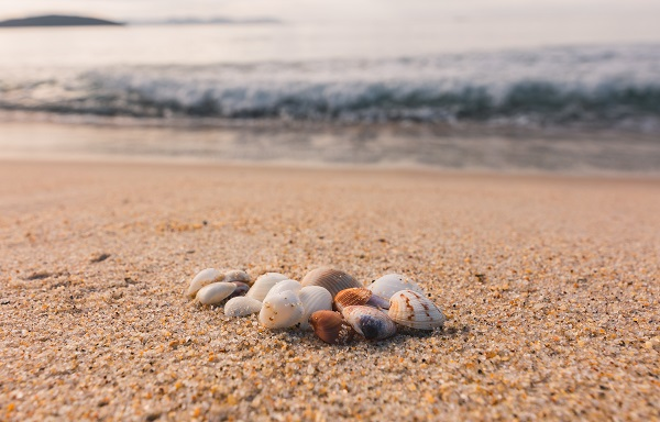 Canva - White and Brown Seashells on Brown Sand Beach
