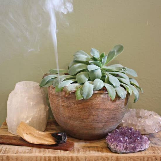 Palo Santo Natural Incense plant