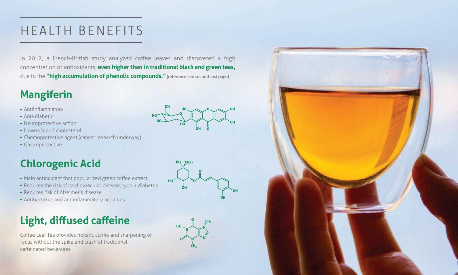 Coffee Leaf Health Benefits