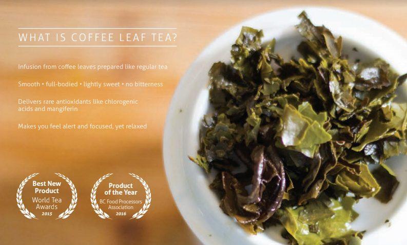 What is Coffee Leaf Tea